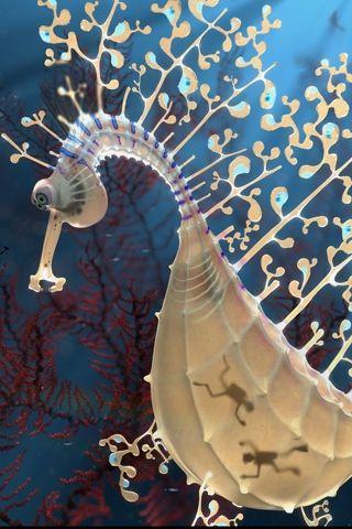 Leafy Sea Dragon via National Geographic