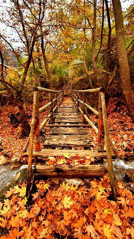 bridge, 3