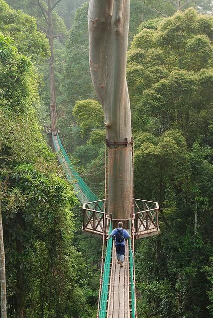 Rainforest Canopy Walkway by Travelust 88