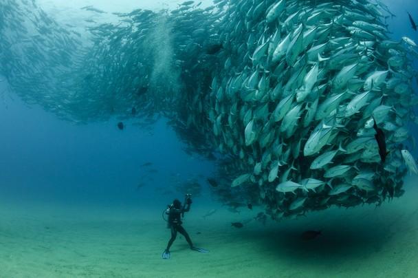 fish-diver