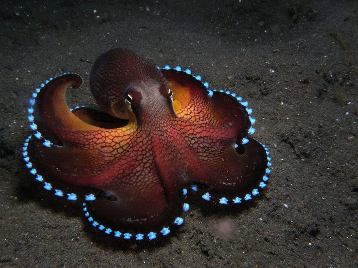 I think it's an octopus.  Or squid?