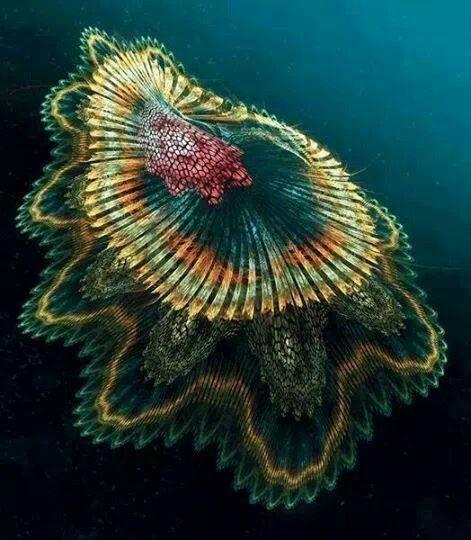 Испанская танцовщица Медузы