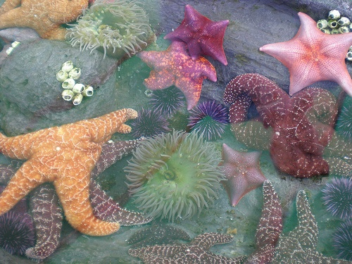 By Ari Lynn Day on Flickr, starfish