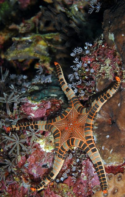 Icon starfish  by Mark Atwell flickr