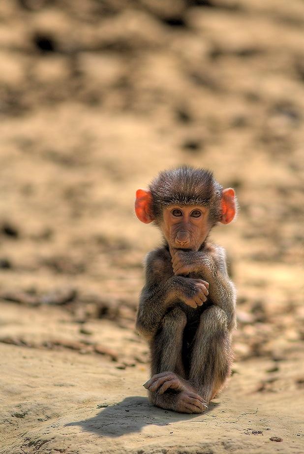 Детские пустыня обезьяна