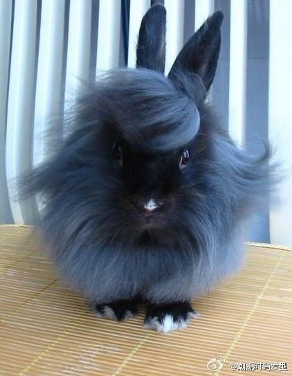 Синий кролик