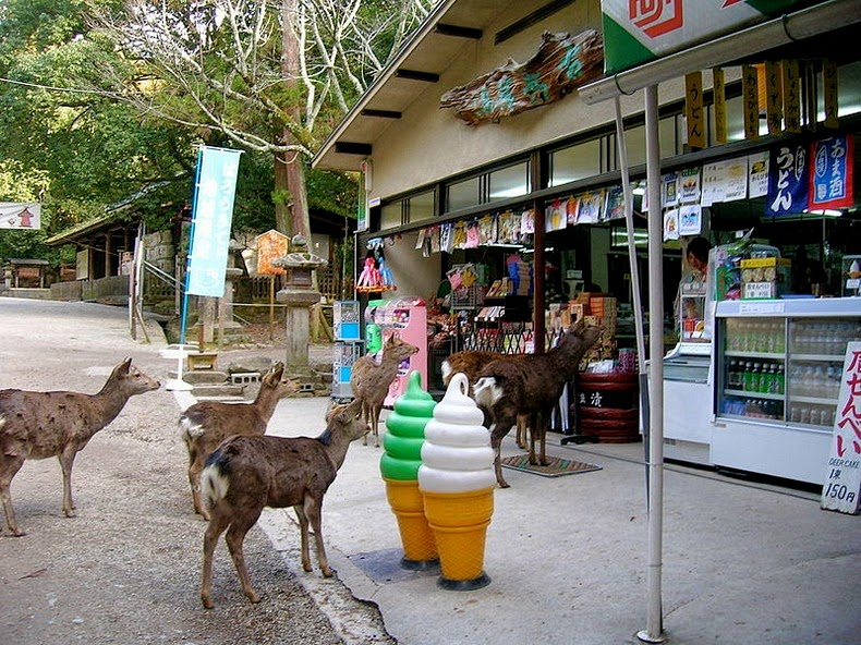 animals, deer