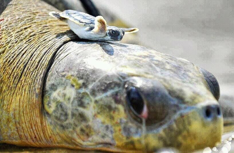 животные, черепаха и малыш, Кэт