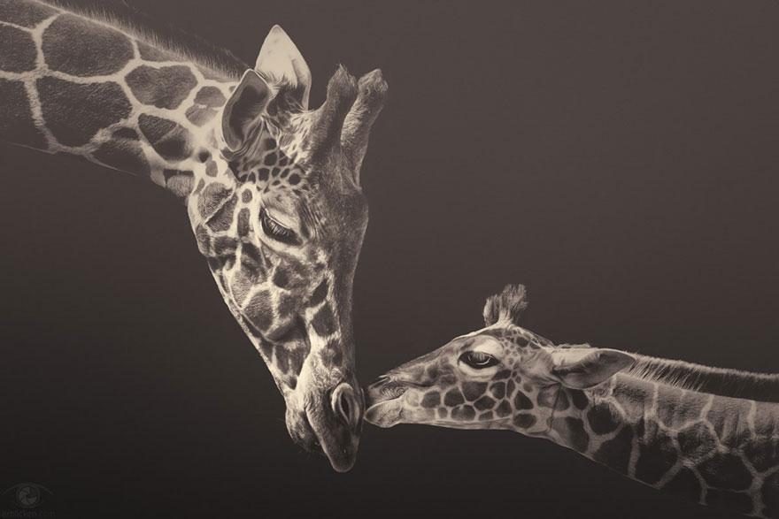 animals via Jen H and bored panda by Manuela Kulpa