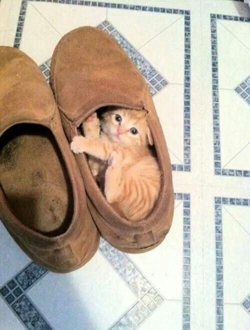 котенок в обуви