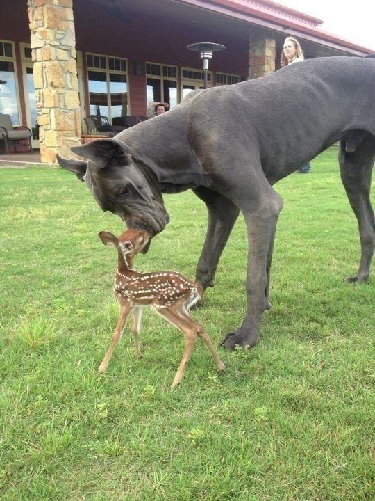 смешанные виды, собака и палевый