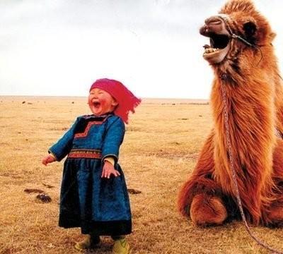 kids, camel