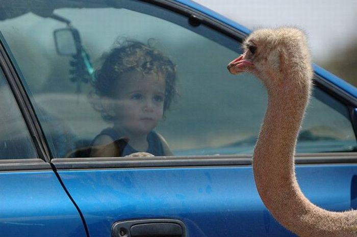 kids, ostrich