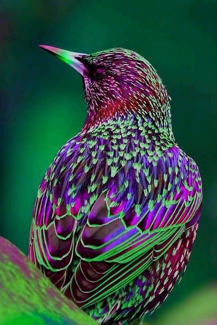 birds, 2 (2)