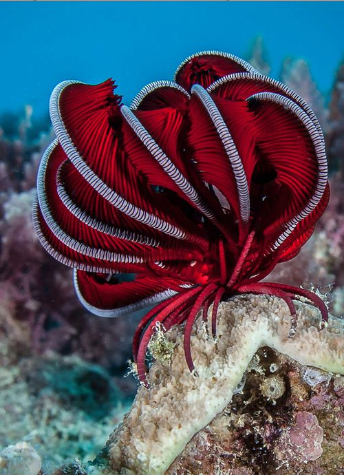 Crinoid.  In case you're wondering, it's an animal, not a plant.