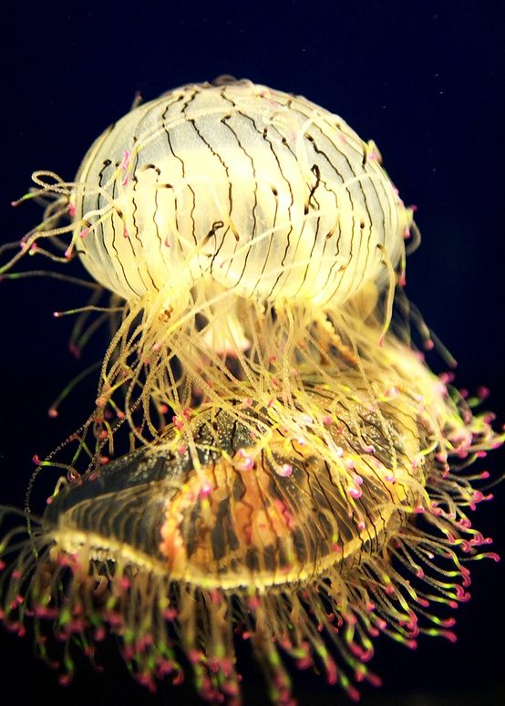 Rare Glowing Flower Hat Jellyfish