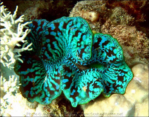 clams, 3