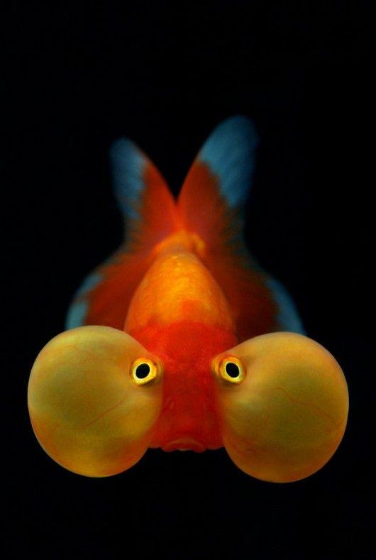 fish in a bubble