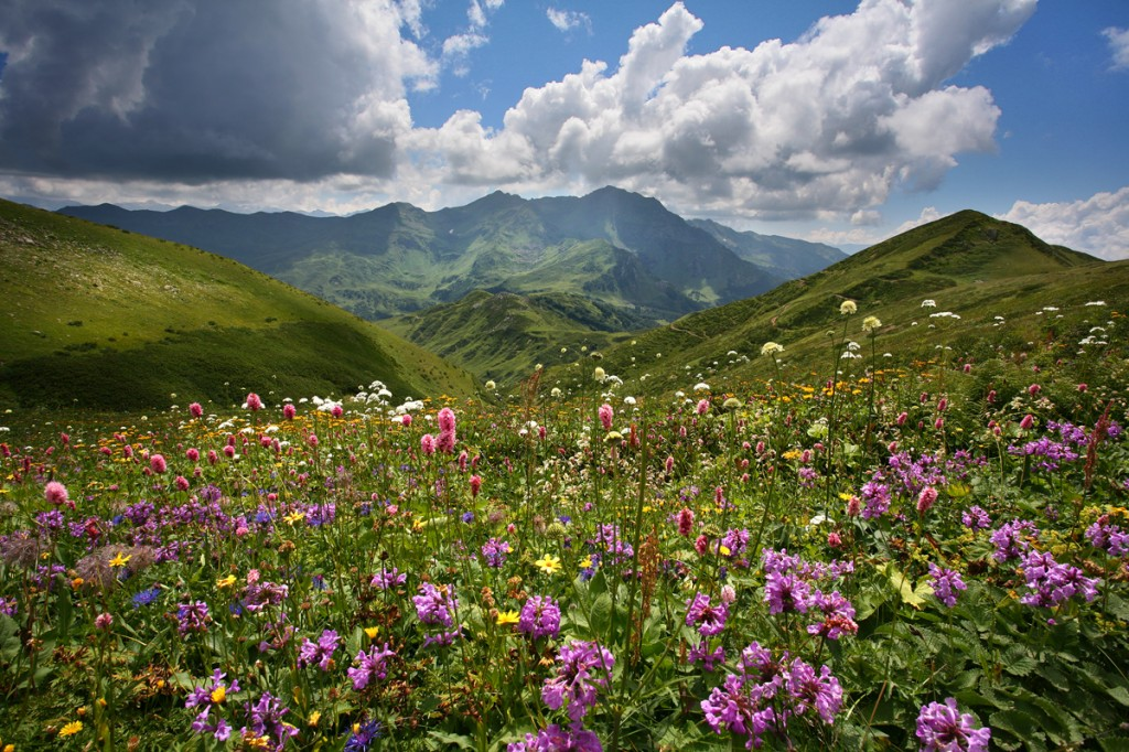 Forbs Caucasus Mountains