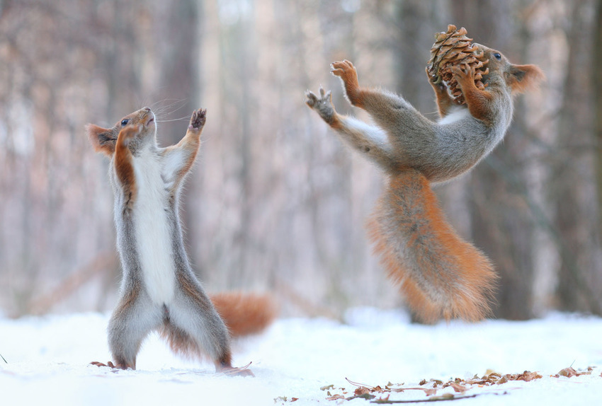 squirrels-5 by Vadim Trunov, Russian photog via Jen H