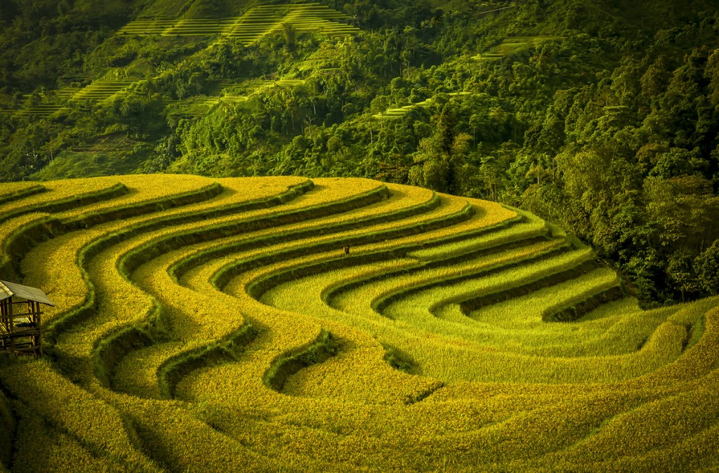 Terraced fields in Vietnam via Smithsonian