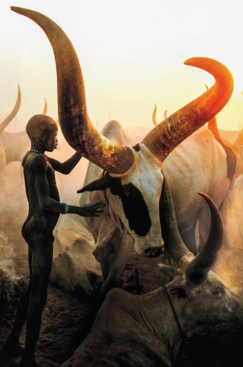 Dinka Boy with Long Horned Bull, South Sudan, photographed by Carol Beckwith and Angela Fisher