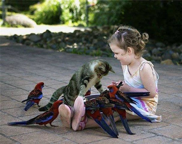 mixed species, girl and cat and birds