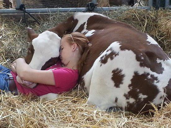 mixed species, girl and cow
