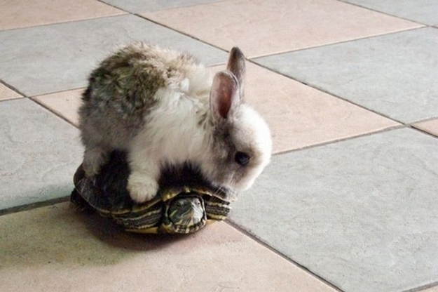 mixed species, turtle and bunny