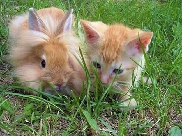 mixed species, twins
