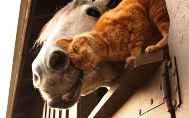 mixes species, cat and horse