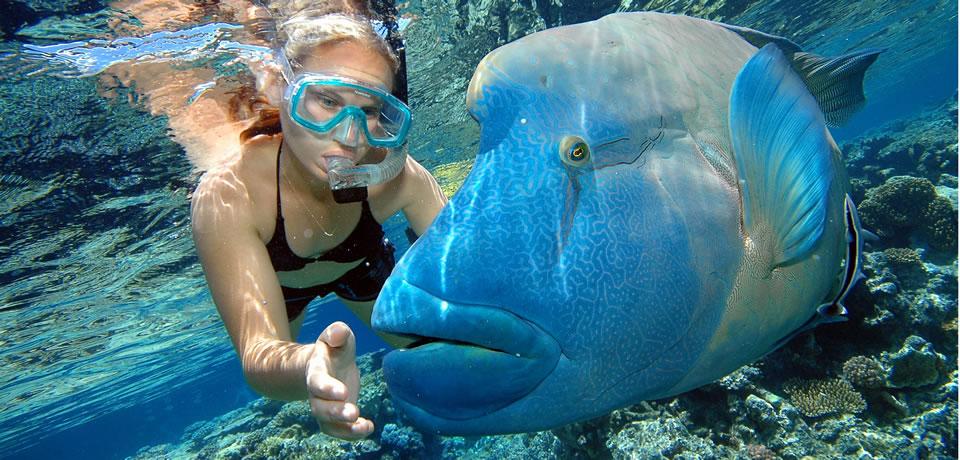 aus, gbr, snorkel