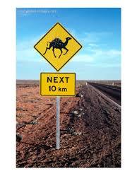 aus, outback ferel camels