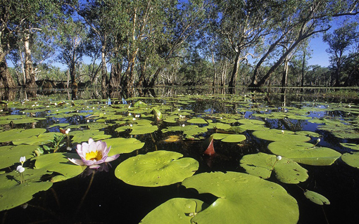 From the wetlands of Kakadu.