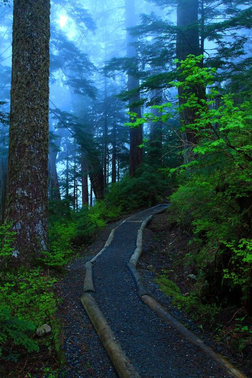 Foggy Lake Trail, Mt. Baker-Snoqualmie National Forest, Washington, USA