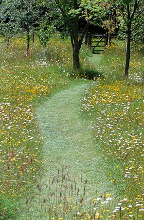 Mown path through the wildflower meadow at Great Dixter, UK. Buttercups and Ox eye daisies.