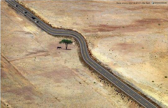roads, tree