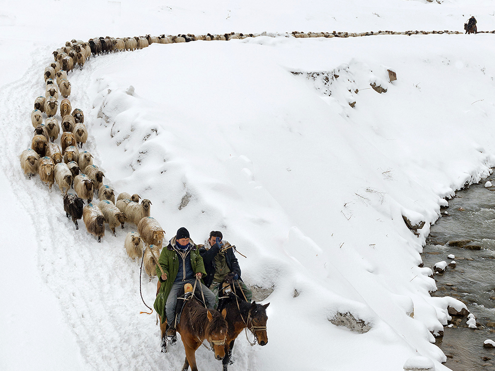 Kazakhs herd their sheep in Yili, Xinjiang Uighur Autonomous Region March 12, 2015. Around 400,000 livestock in Yili started the 10-day trip to their spring pasture at the end of winter, according to local media. REUTERS/China Daily