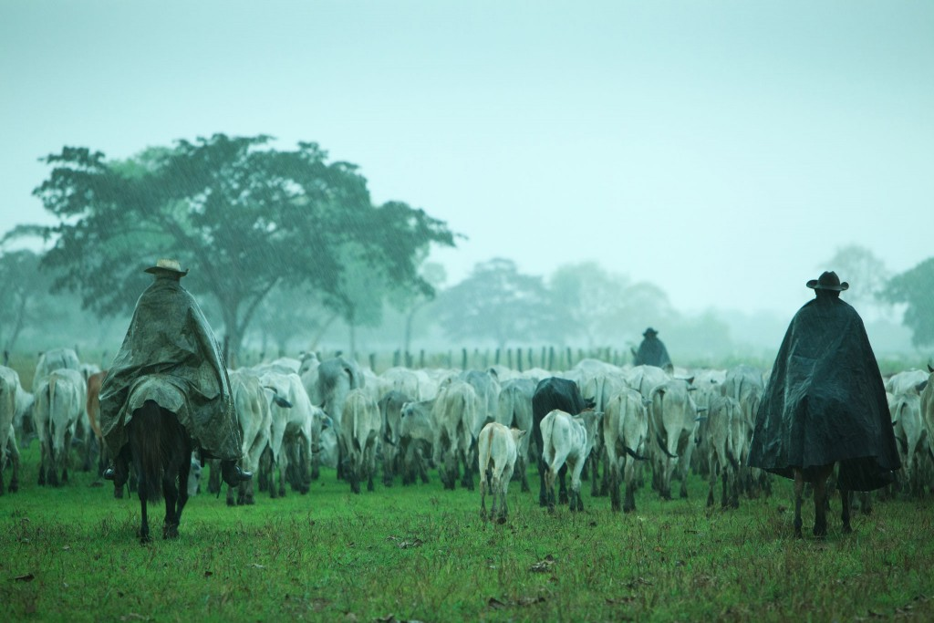 "Pantanal, Brazil. ""Cowboys drive a herd of hundreds of cattle over a vast meadow.  Image .by Uruma Takezawa"