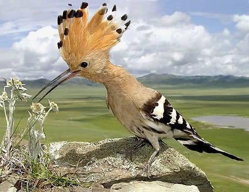 bird, via drb