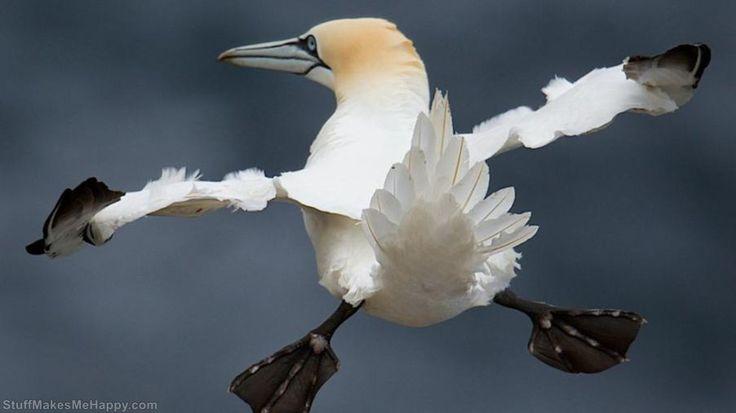 birds, via Fiorino