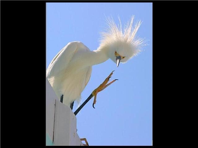 birds, via murray 3