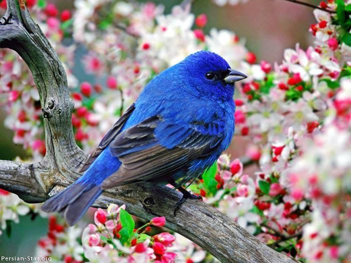 birds, via nan wicker, 2