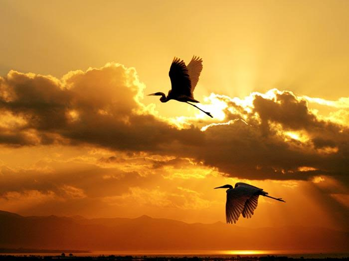 birds, via nan wicker