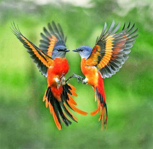 birds, via pint 2