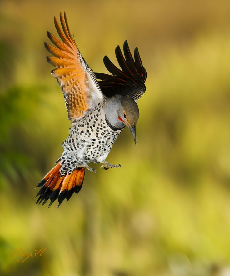 birds, via pint