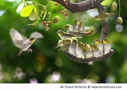 birds, yellow
