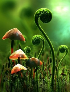 Mushrooms and ferns.
