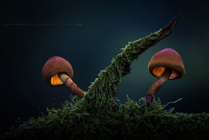 aa, mu Pfister, Using tiny LED lights that he carefully placed behind the mushrooms, Martin was able to photograph these fungi in a magical and other worldly way.