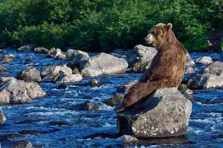 animals, bear 2